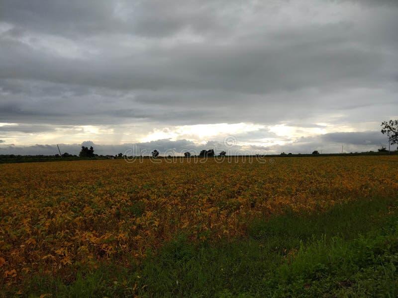 Monsun fördunklar med silverfoder över sojabönafält royaltyfria foton