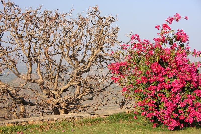 Monsunslottträdgård, Udaipur, Indien royaltyfri foto