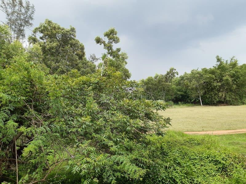 Monsunu niebo zdjęcie royalty free