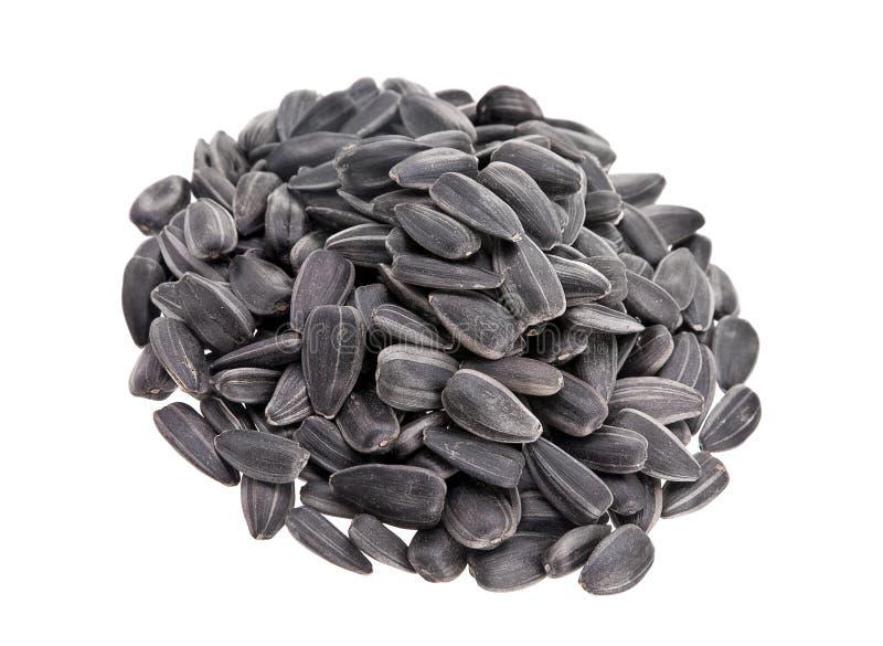 Montão da semente do girassol foto de stock royalty free