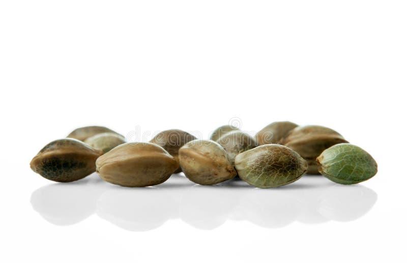 Montão das sementes do cannabis do cânhamo isoladas no fundo branco foto de stock royalty free