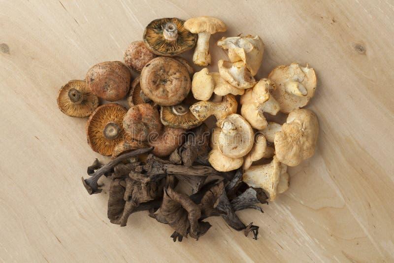 Montão de cogumelos selvagens frescos foto de stock royalty free