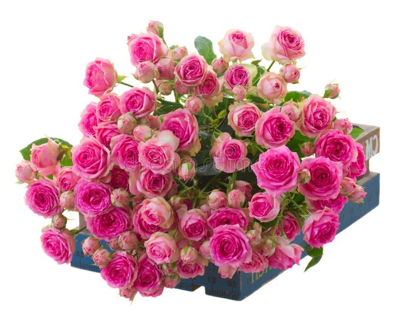 Montão de rosas cor-de-rosa frescas imagens de stock
