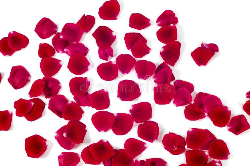 Montão de Rose Petals vermelha isolado no fundo branco imagens de stock royalty free