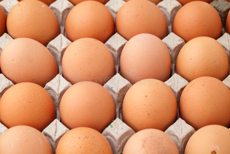 Montão do ovo da exploração agrícola foto de stock