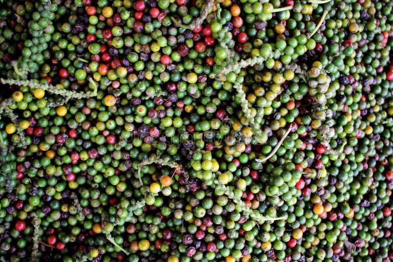 Montão dos grãos de pimenta - Mangalore novo, Índia imagem de stock royalty free