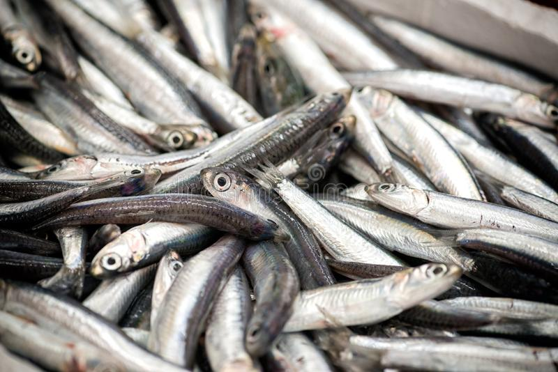 Montão dos peixes no fim acima da vista fotografia de stock