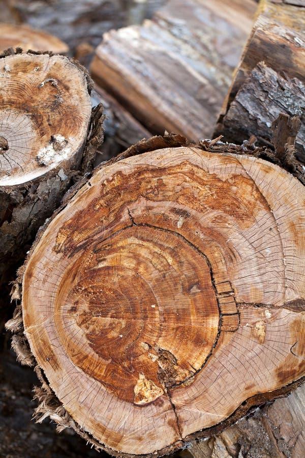 Montão dos troncos imagens de stock royalty free