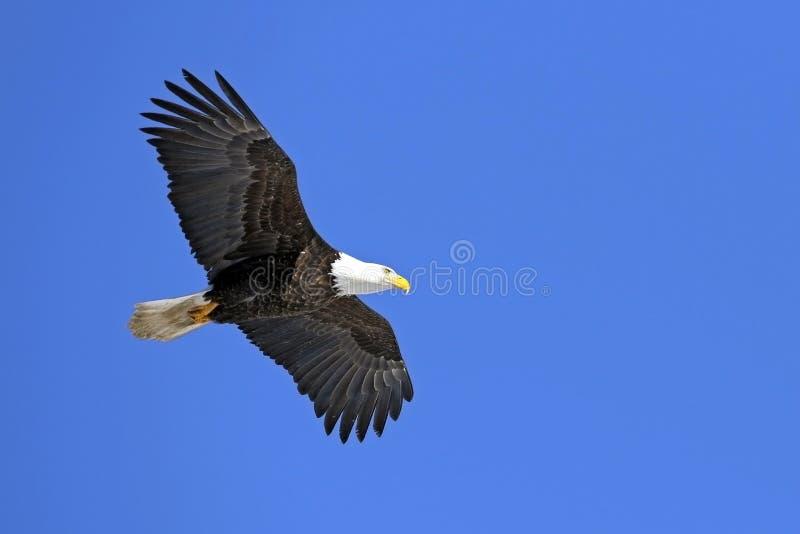 Montée d'Eagle images libres de droits