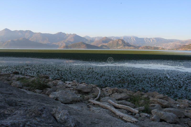 Monténégro, lac Skadar photographie stock libre de droits