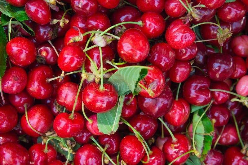 Montón de cerezas dulces recientemente escogidas orgánicas maduras con las hojas del verde en el mercado mediterráneo de los gran foto de archivo libre de regalías