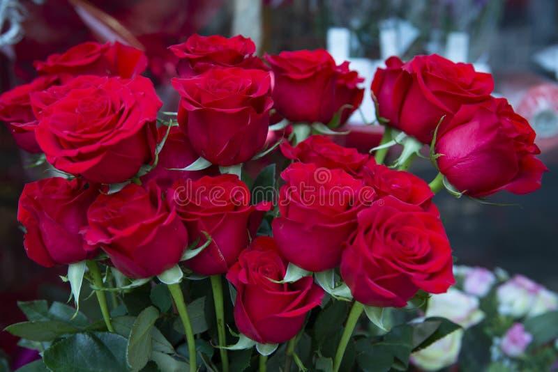 Montón de hermosas rosas rojas, imagen de archivo libre de regalías