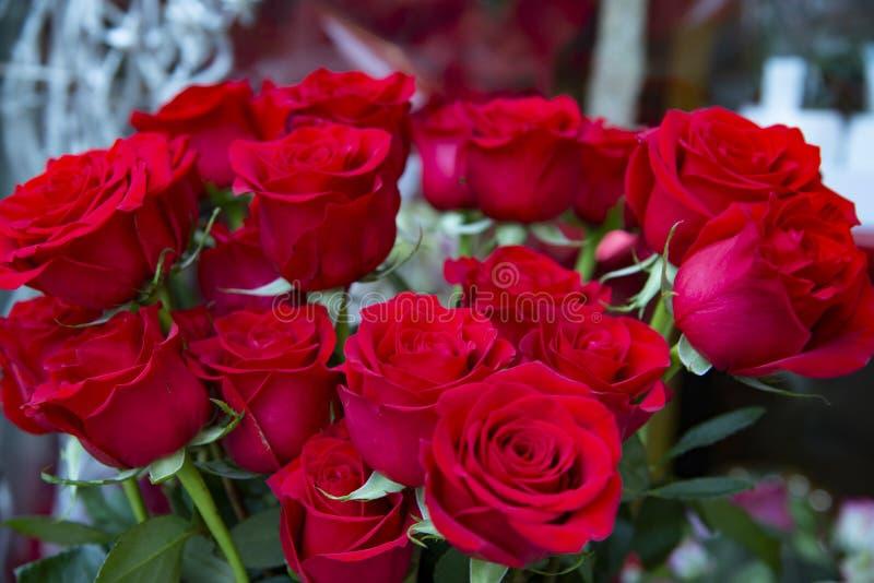 Montón de hermosas rosas rojas, fotos de archivo