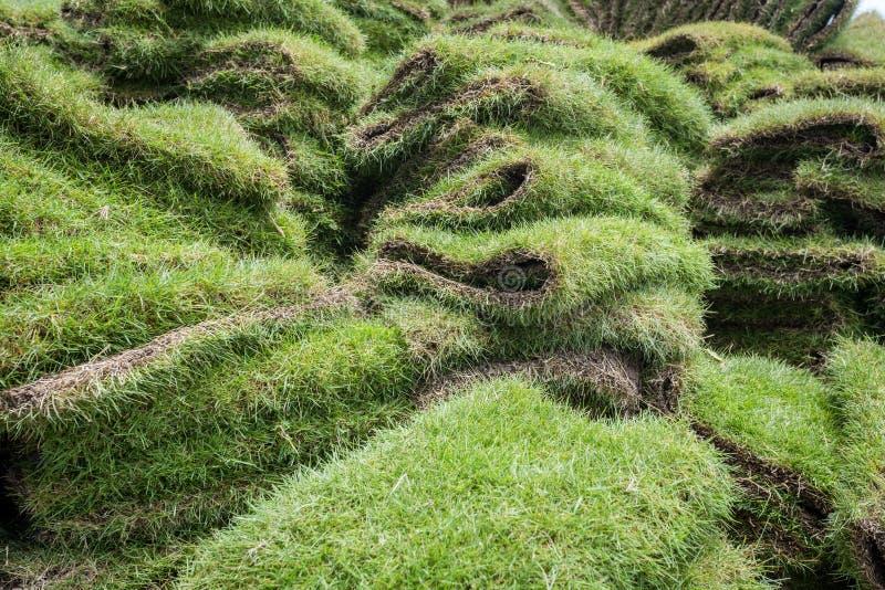 Montón de los céspedes naturales de la hierba foto de archivo