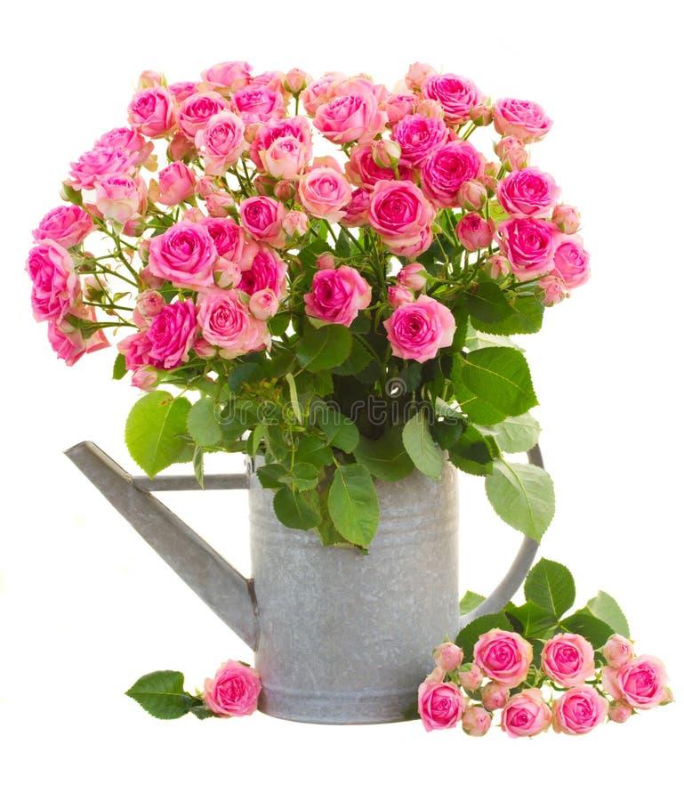 Montón de rosas rosadas frescas foto de archivo