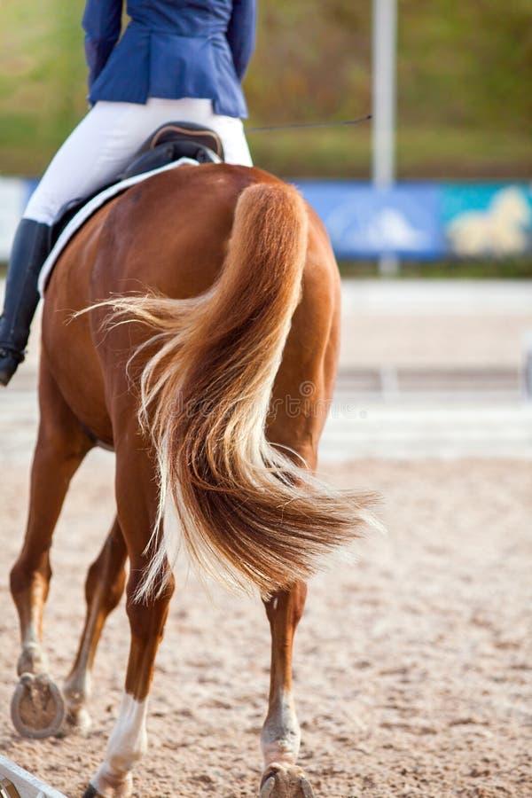 Montón de un caballo rojo con una cola en movimiento y un jinete sobre él foto de archivo