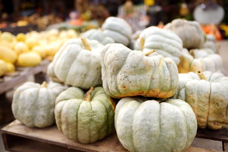 Montón gigante de bio calabazas sanas grandes frescas en granja agrícola en el otoño foto de archivo