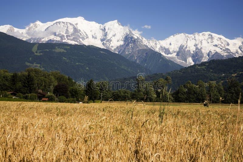 Mont Blanc e campo di cereale fotografia stock libera da diritti