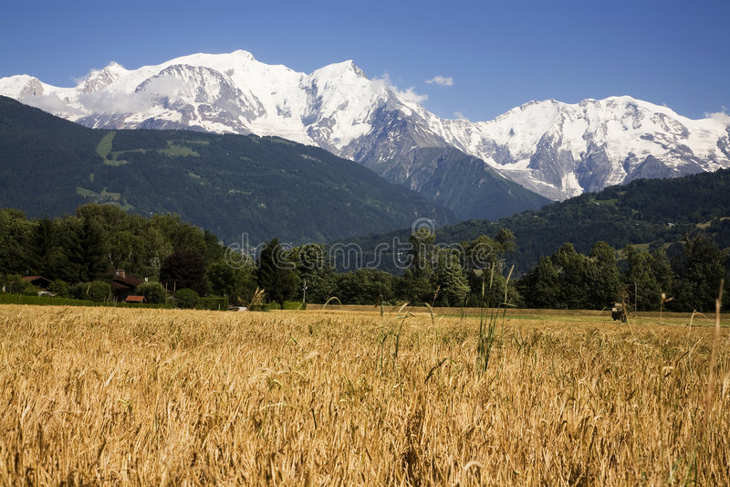 mont de zone de maïs de blanc photo libre de droits