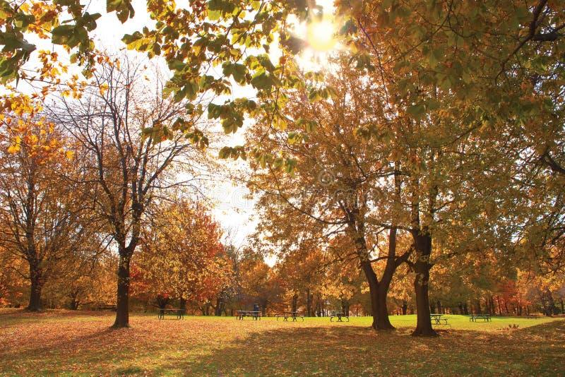 Mont Królewski park Montreal, Złocista jesień obraz stock