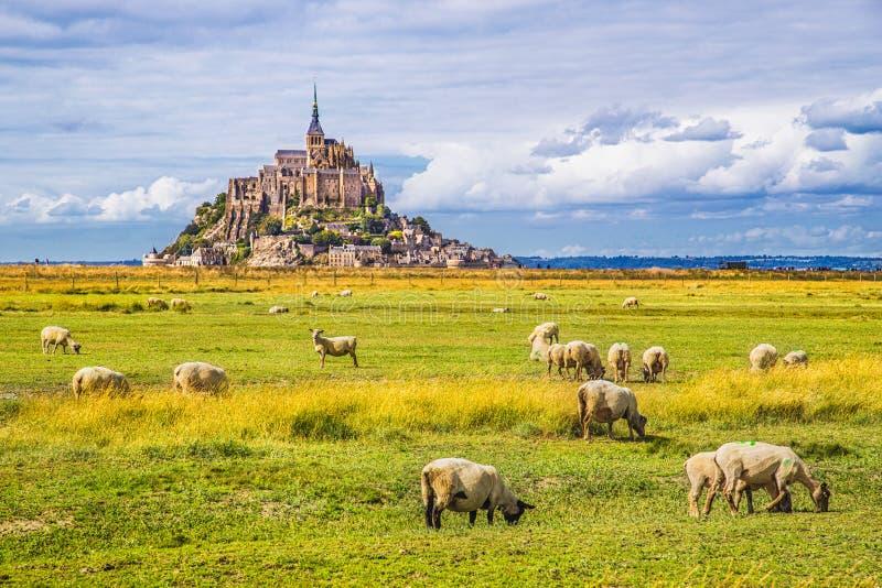 Mont Saint-Michel con las ovejas que pastan, Normandía, Francia foto de archivo