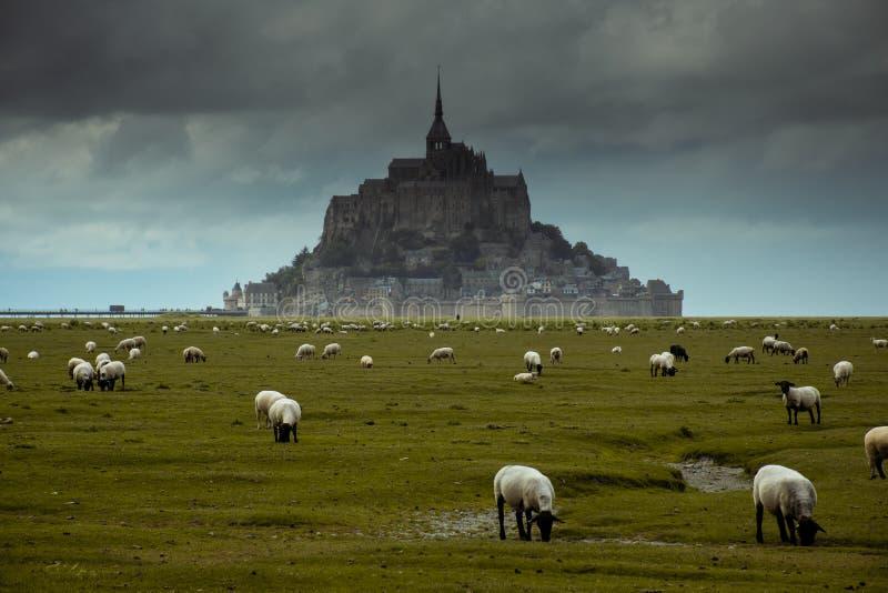 Mont St Michel-kerk dichtbij door het overzees in Noordelijk van Frankrijk tijdens bewolkt met vele schapen stock foto's