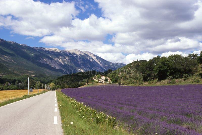 Download Mont Ventoux France stock photo. Image of ventoux, lavender - 3124884
