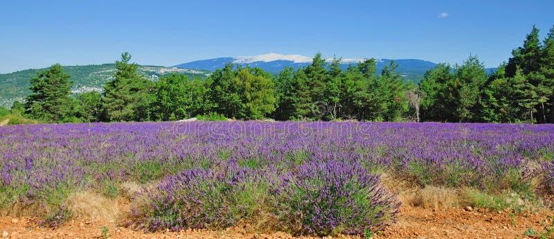 Mont Ventoux, Provence, France photos stock