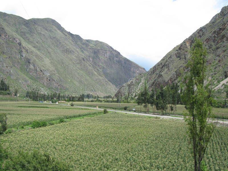 Montañas de Peru, rodeada de verdes praderas royaltyfri bild