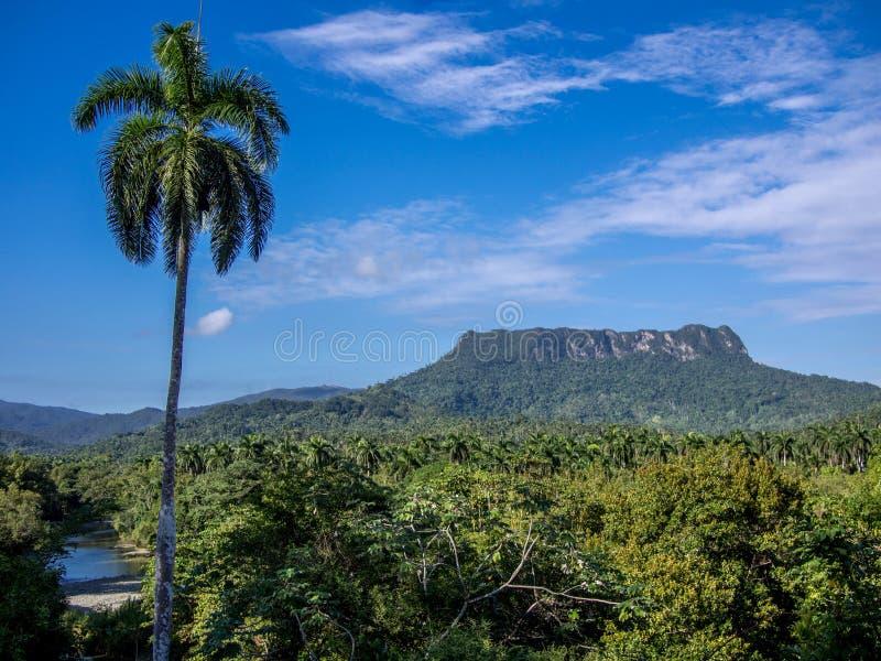 Montaña Baracoa del EL Yunque foto de archivo