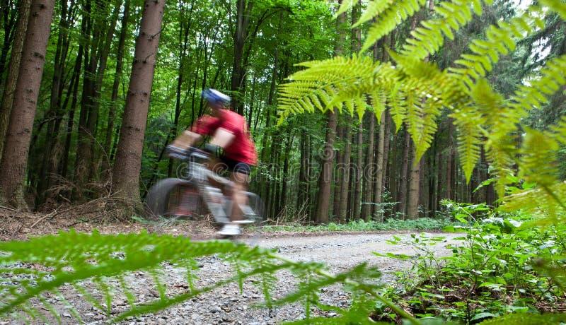 Montaña biking en un bosque fotos de archivo libres de regalías