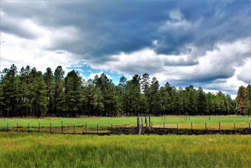 Montaña blanca, Pinetop Lakeside, Arizona, Estados Unidos fotos de archivo
