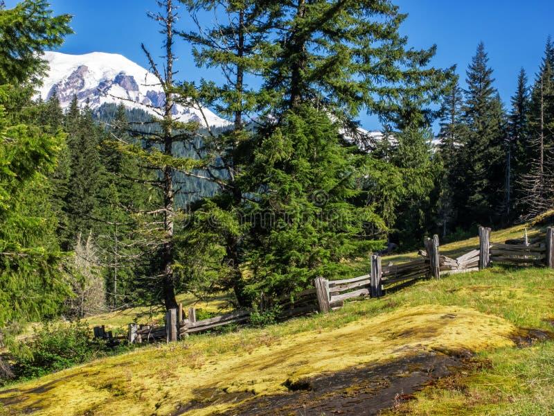 Montaña capsulada nieve con los árboles y el prado foto de archivo