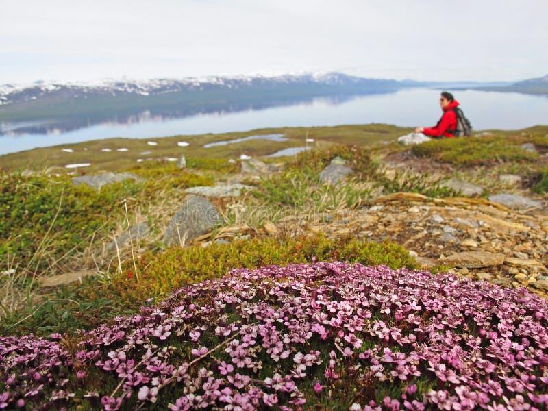 Montaña con las flores salvajes fotos de archivo