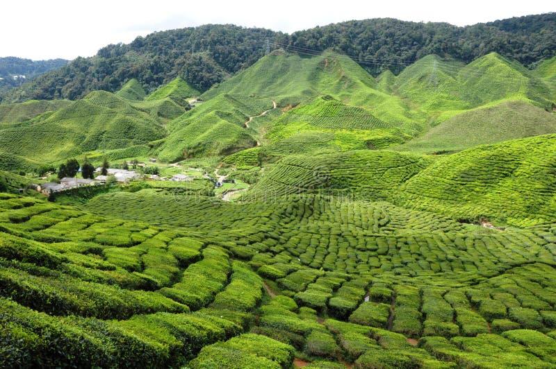 Resultado de imagen de montañas de cameron malasia