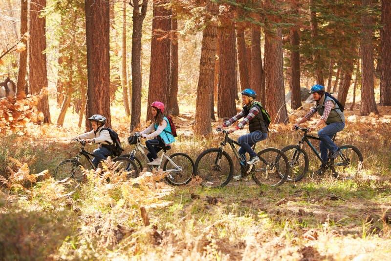Montaña de la familia biking en el rastro del bosque, Big Bear, California foto de archivo libre de regalías
