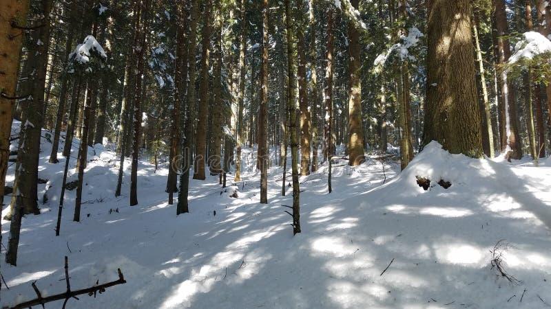 Montaña de la nieve con el cielo azul profundo Cárpato, Ucrania, Europa Madera en el Mounta fotografía de archivo