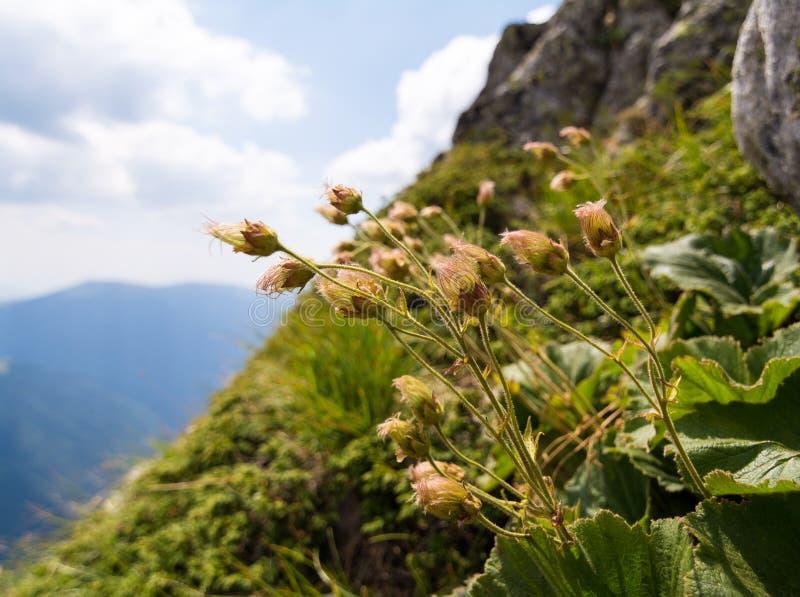 Montaña de Rila imagen de archivo libre de regalías