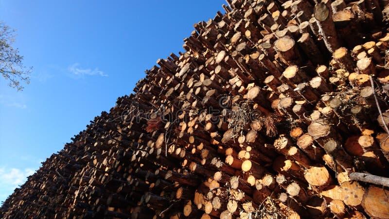 Montaña de troncos. Árboles talados ñ stock images