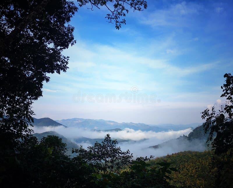 montaña del árbol del té foto de archivo