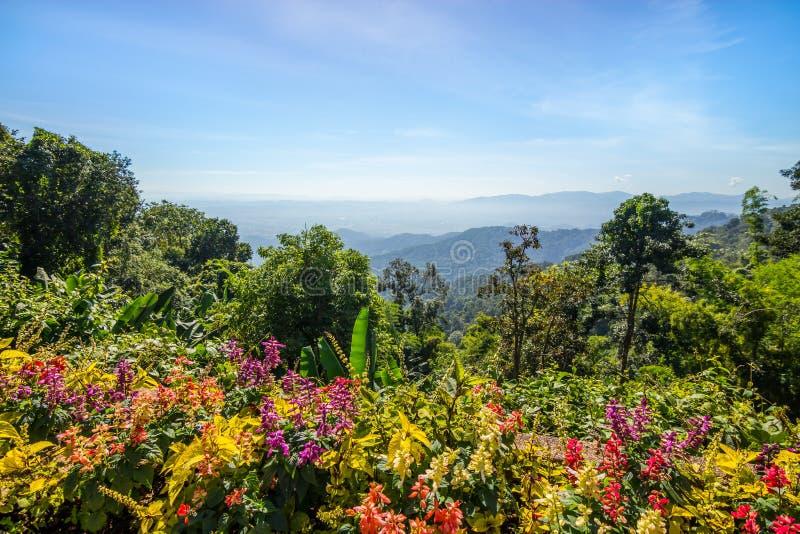 Montaña del bosque de la cama de flor y cielo azul fotos de archivo