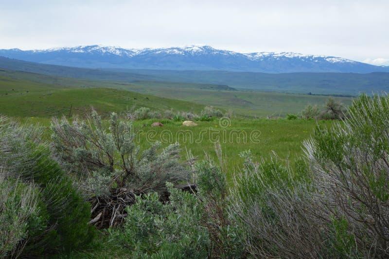 Montaña del Cuddy, Idaho imagen de archivo libre de regalías