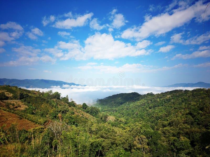 Montaña del té en XISHUANGBANNA imágenes de archivo libres de regalías
