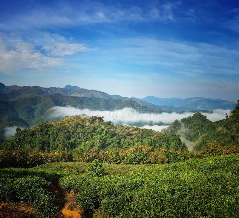 Montaña del té en XISHUANGBANNA foto de archivo