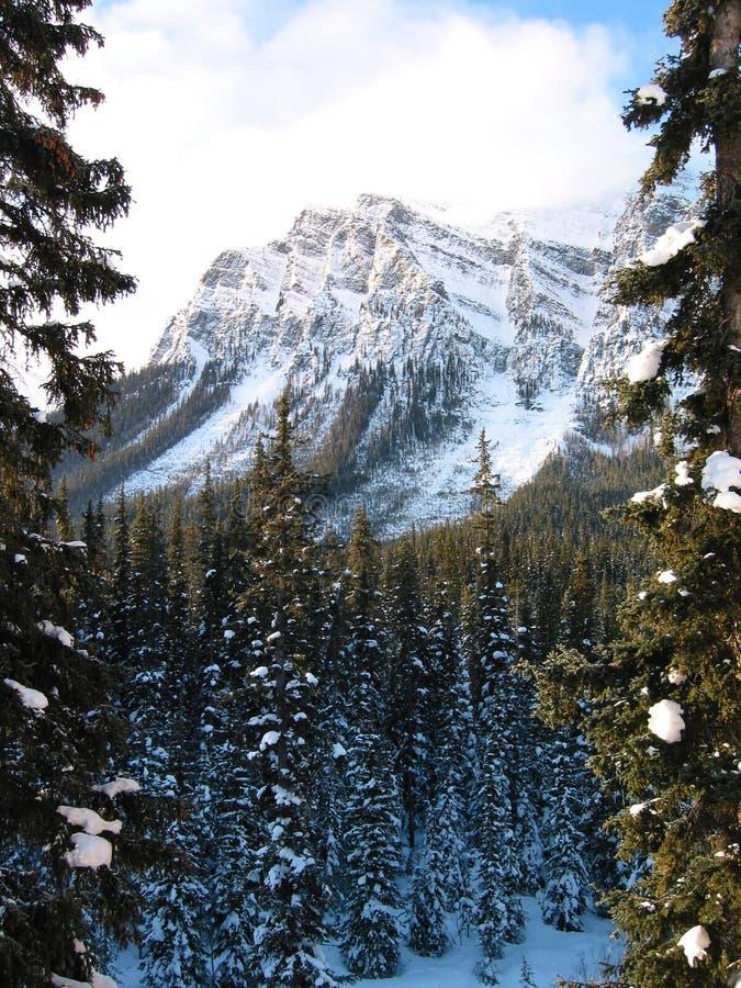 Montaña majestuosa con un bosque nevoso 2 imagen de archivo