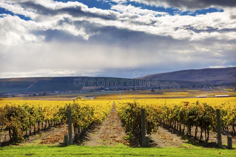 Montaña roja Benton City Washington de las vides de las uvas de los viñedos amarillos de la caída imagen de archivo libre de regalías