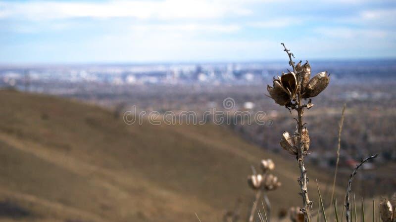 Montaña verde que pasa por alto Denver fotografía de archivo libre de regalías