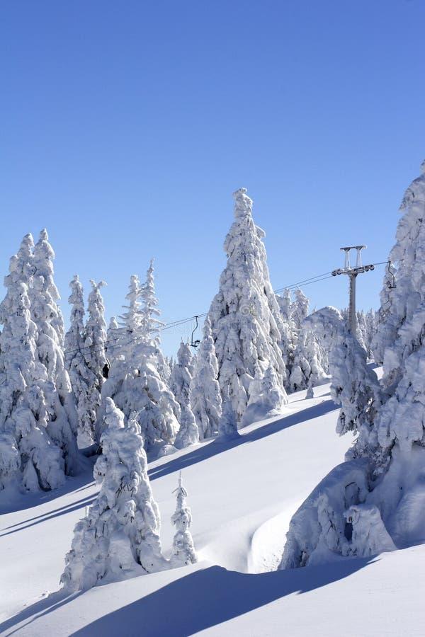 Montaña y árboles nevados foto de archivo libre de regalías