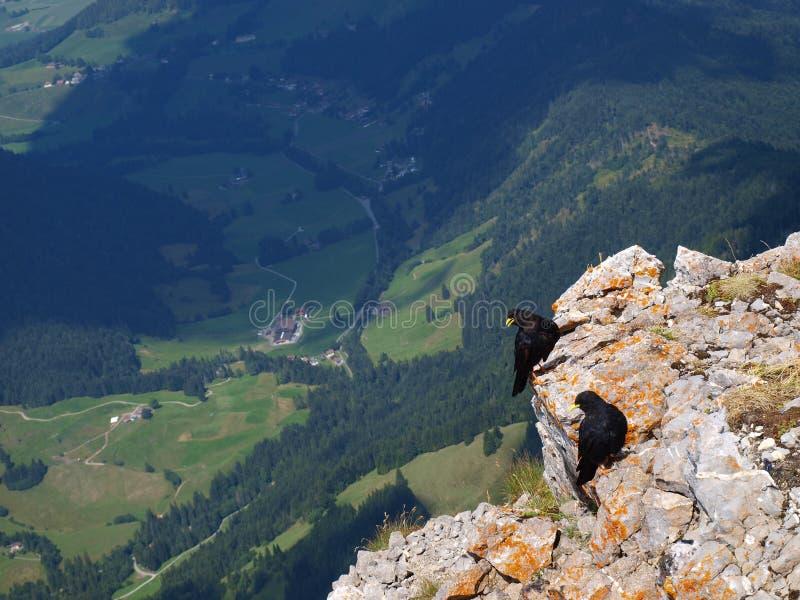 Montaña y pájaros imagen de archivo