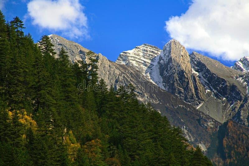 Montaña y pinos coronados de nieve imagen de archivo